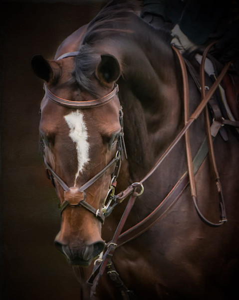 Bridle Portrait of Biscuit - Signed