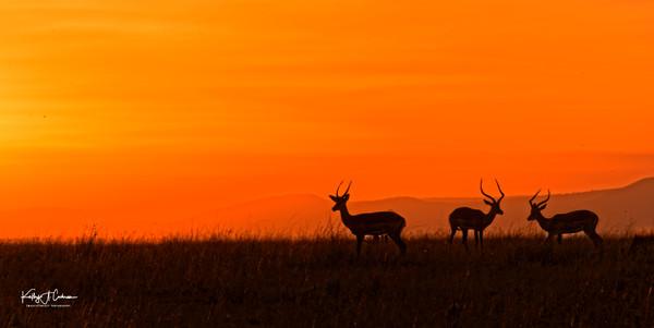 Kenya sunset 4