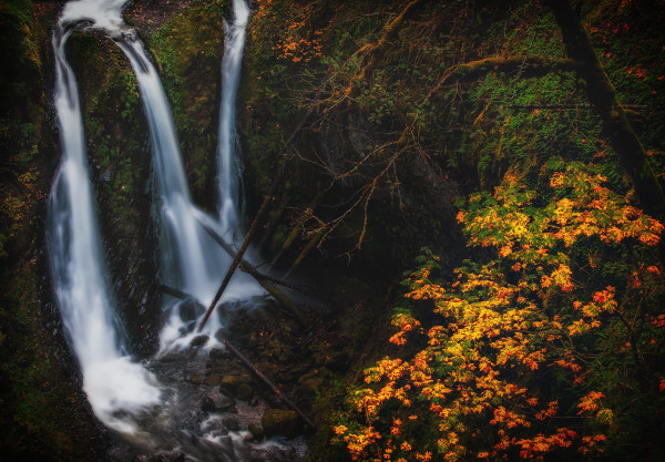 Forest & Waterfall Portfolio