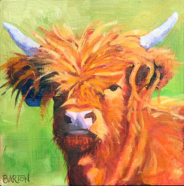 calf, mohawk, horns