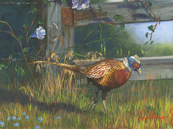 Ringneck Pheasant farm print