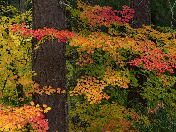 Autumn Central Oregon