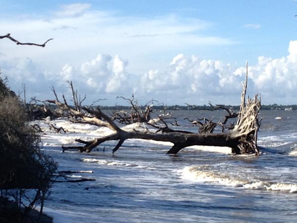 Jekyll Island II Driftwood Beach