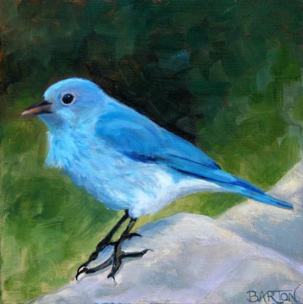 bluebird, standing, tweet