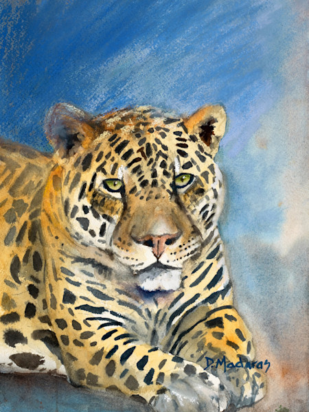 Southwest wildlife painting | Tucson Gallery | Jaguar