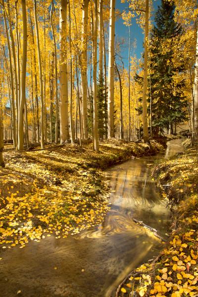 Leaf Trails