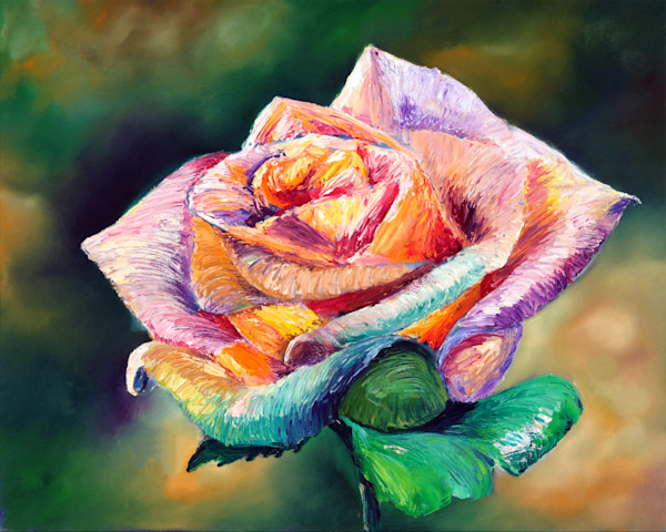 The Colors of a Rose