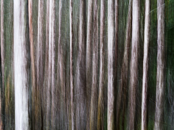 Forest Abstraction