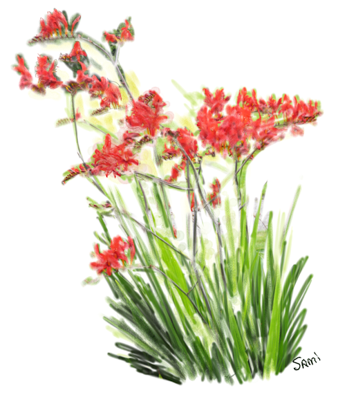 """Red Irish Flowers Art for Sale"""