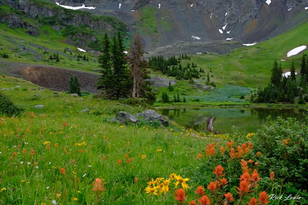 Gold King Basin Wildflowers