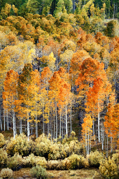 Autumn Splash by Stanley Paul Photography