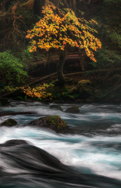Zen Flow by Stanley Paul Photography