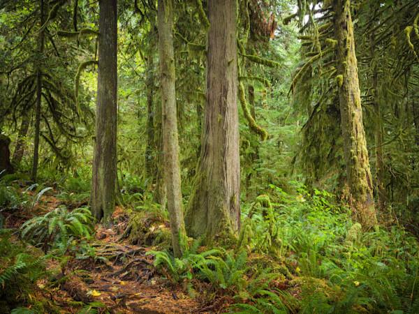 Homesite Creek Forest