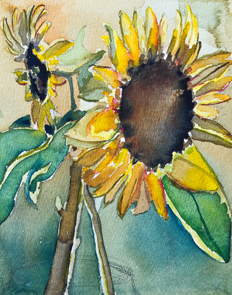 Big Sunflowers Fine Art Print