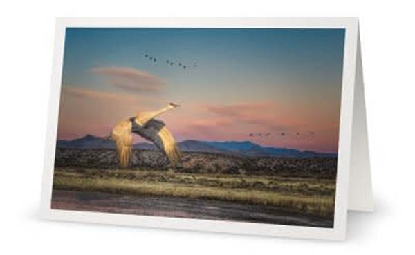 Sandhill Crane in a New Mexico Landscape