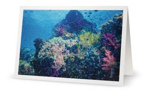 Coral Dreams #3
