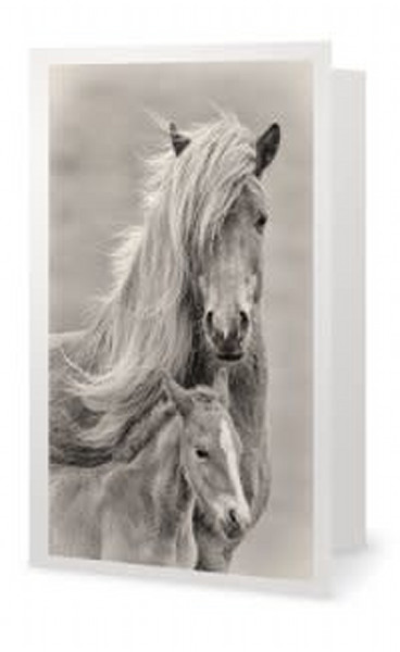 Portrait of an Icelandic Mare and Foal, sepia
