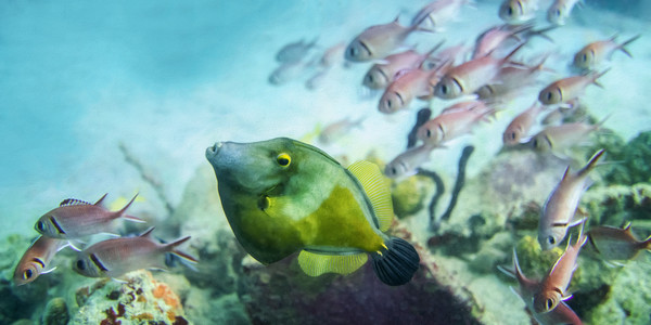 Filefish and Squirrelfish Panorama