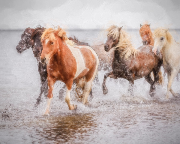 Splash - Skálakot Farm, Iceland 2015