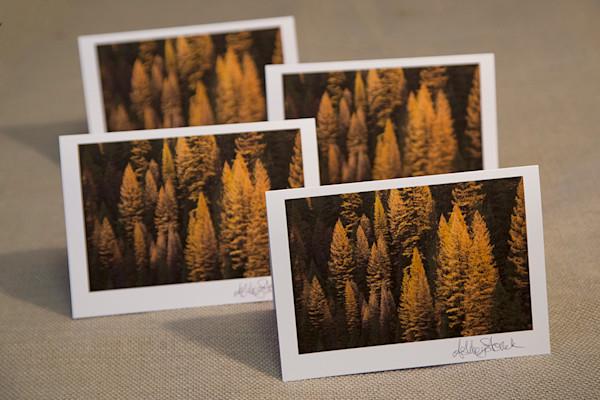 Set of Four Tamarack Notecards