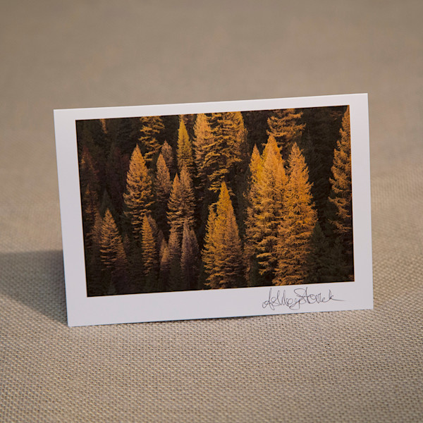 One Tamarack Notecard