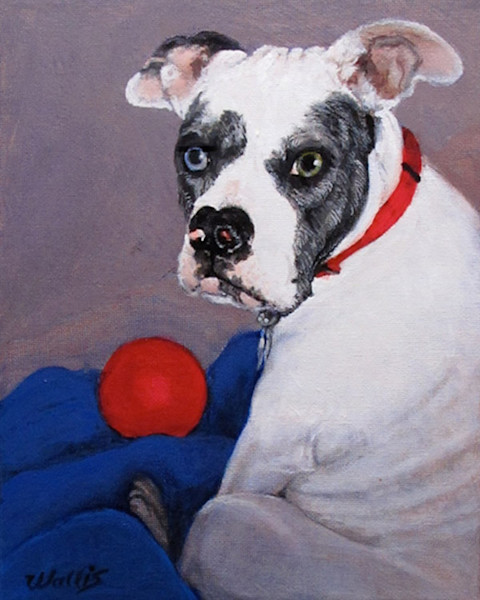 Dog portrait with toy