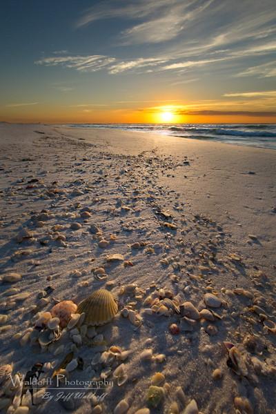 Seashell Shoreline