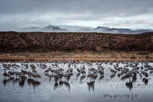 Grey Day - Bosque del Apache, Socorro, New Mexico 2015