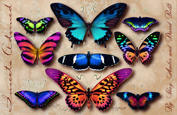 Insecta Adorned Set 1 - World famous butterfly tattoo designs by David Bollt