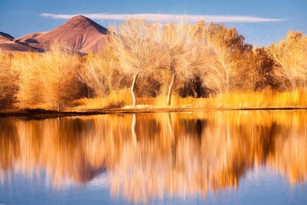 Fall's Reflection AE - Bosque del Apache Wildlife Refuge, Socorro, New Mexico 2009