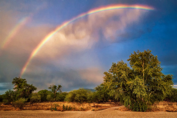 Rainbow Over Cottonwood - Sabino Creek, Arizona 2016