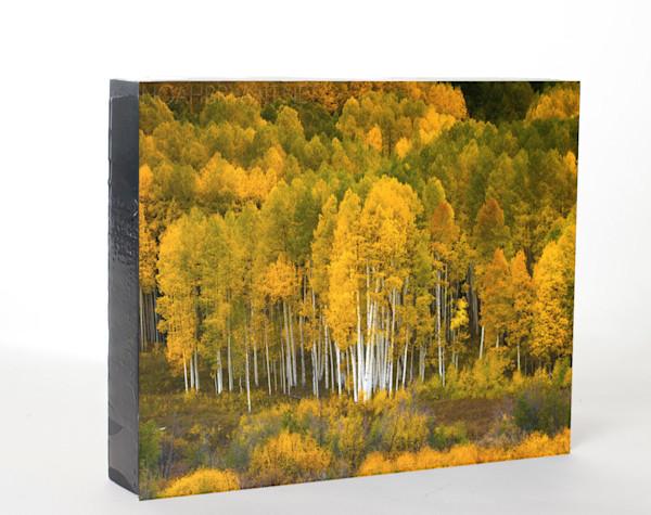 Aspen Grove (8x10)