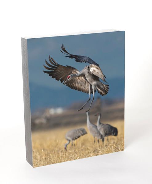 Sandhill Crane (8x10)