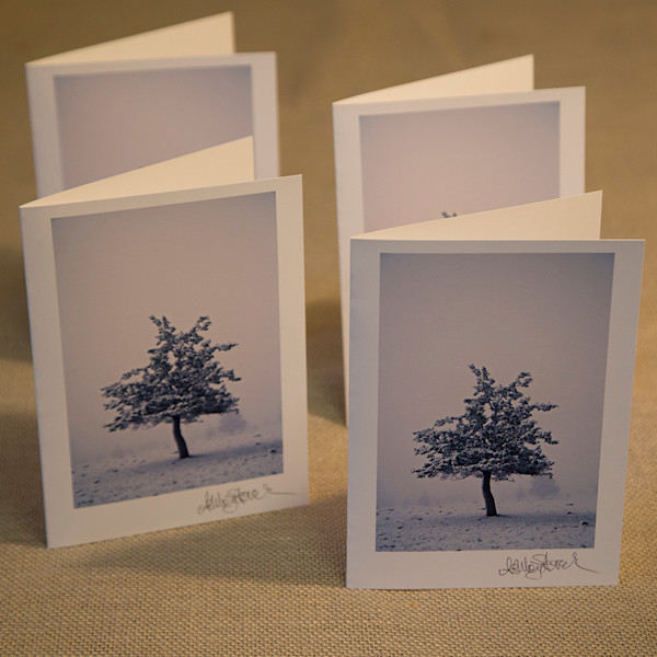 Set of Four Lone Juniper Notecards