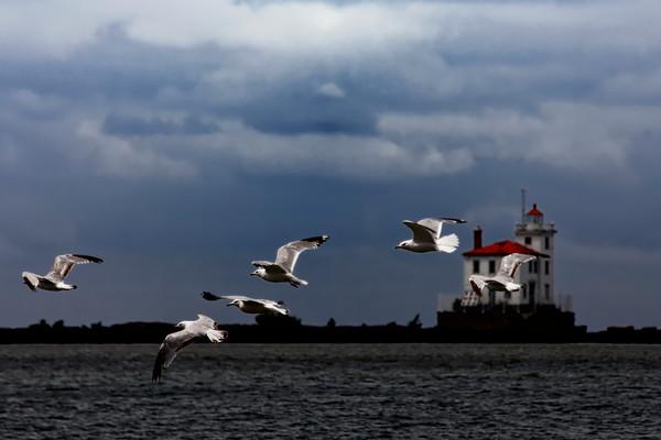 gulls, flight, birds, bird, feathers, clouds