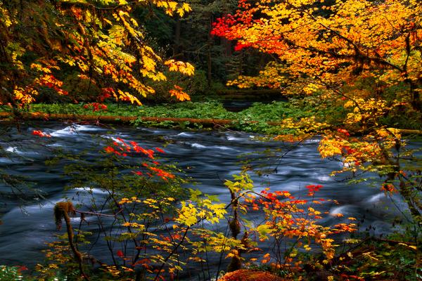 McKenzie Splash - McKenzie River