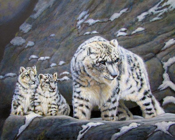 Snow Leopard and Cubs