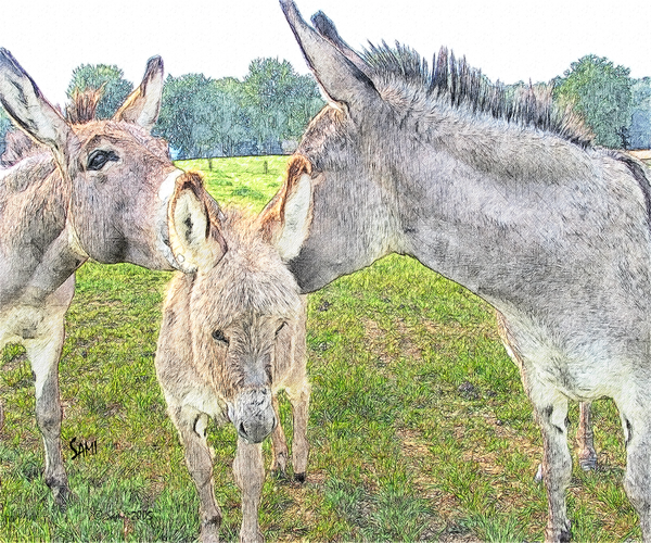 Miniature Donkey Family