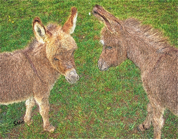 Miniature Donkey Babies Art for Sale