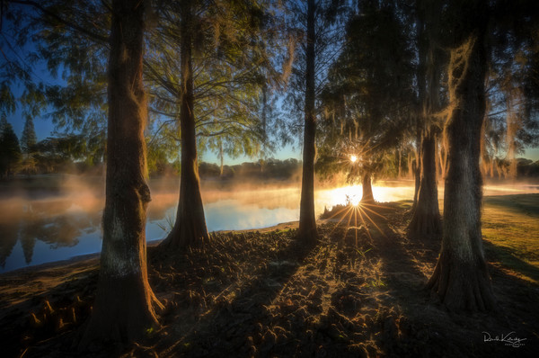 First Light a the Cypress Photographic Art