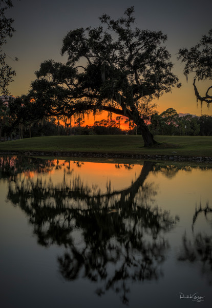 Orange Oak Twilight Photographic Art
