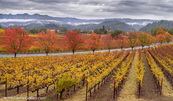 Trinchero Winery Photo