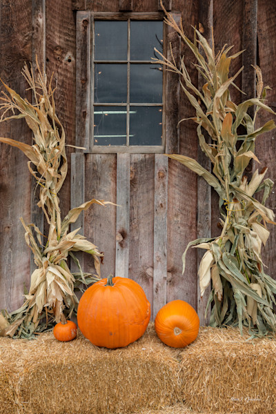 Pumpkin Fall (161580LSND8) Photograph for Sale as Commercial Product or Digital Licensing Only