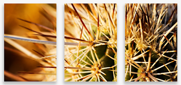Macro Barrel Cactus Spines Multi-Panel Art Wall For Sale As Fine Art