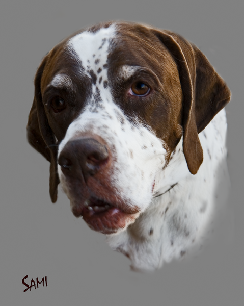 George The Pointer art painting for sale