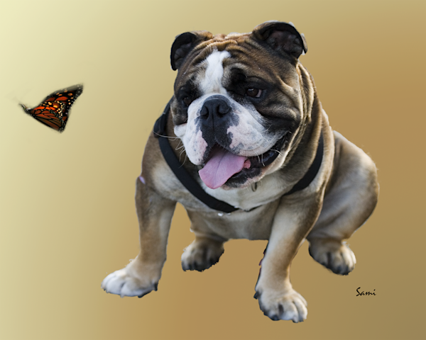 Who Knew A Dog Loved Butterflies Art Photograph for Sale