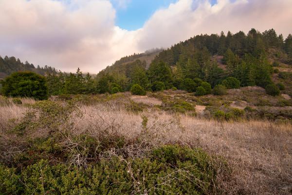 Into The Woods Big Sur California LOA-1632