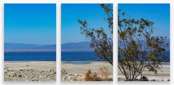 Creosote Bush At The Salton Sea Multi-Panel Art Wall For Sale As Fine Art