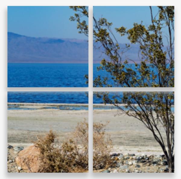 View of a Creosote Bush at the Salton Sea Multi-Panel Art Wall For Sale As Fine Art