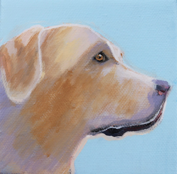 MINI Sky Blue Yellow Lab Mini #2 - 4 x 4